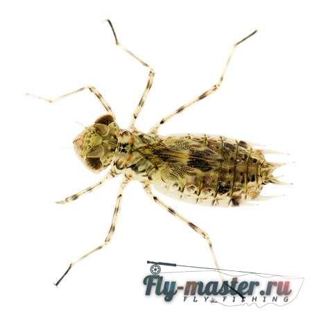 Вяжем мушку личинки поденки