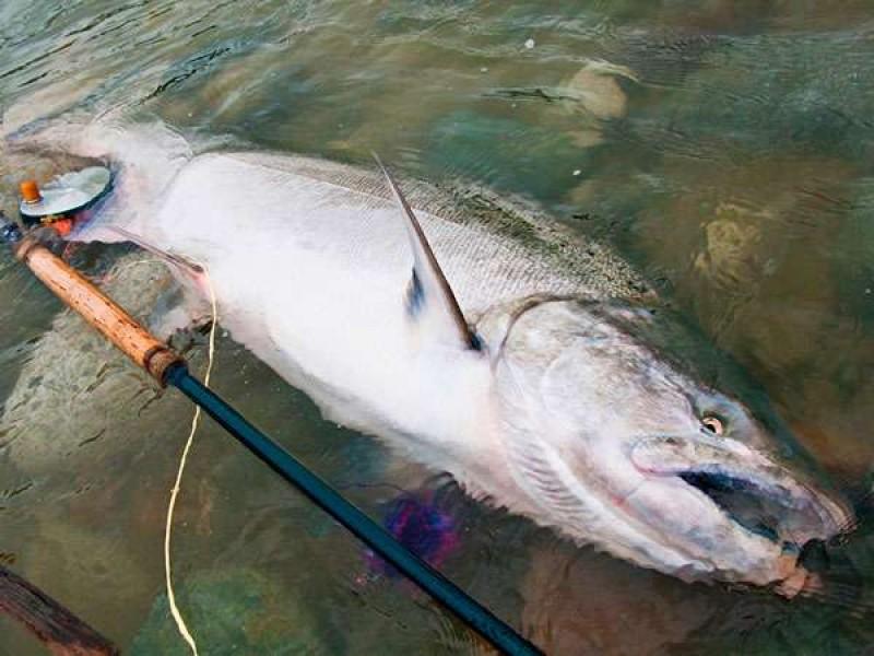 Ловля чавычи нахлыстом на Камчатке