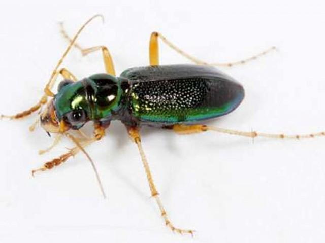 ЖУКИ и мушки, их имитирующие - уроки нахлыстовой энтомологии