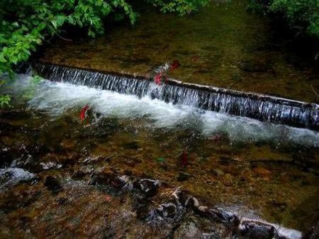 Как изменяются стоянки рыбы в зависимости от уровня воды