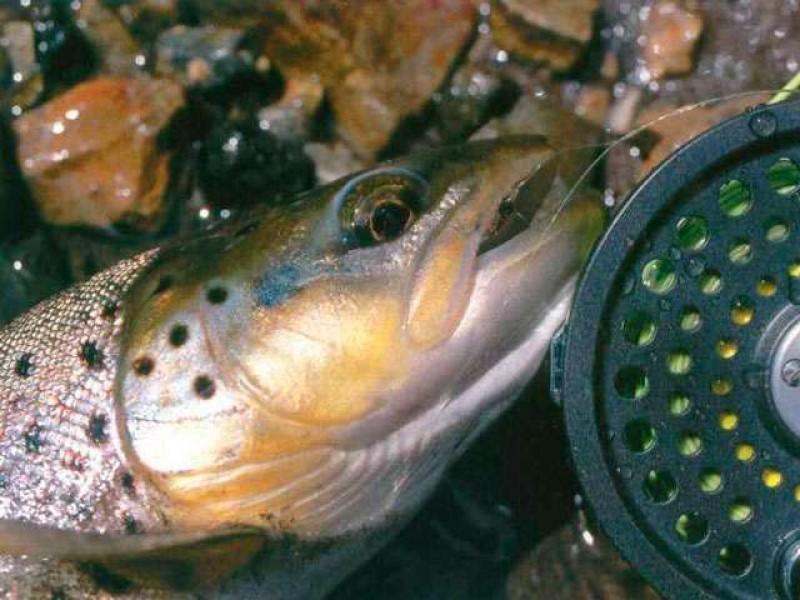 ловля рыбы нахлыстом на нимфу