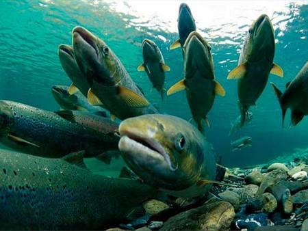 Новые правила рыболовства в Поморье